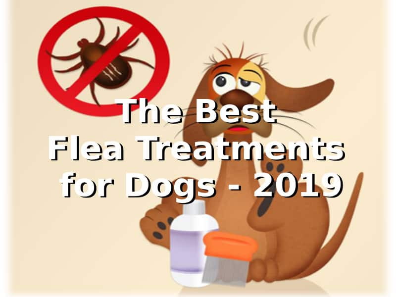 Best flea treatment for dogs 2020